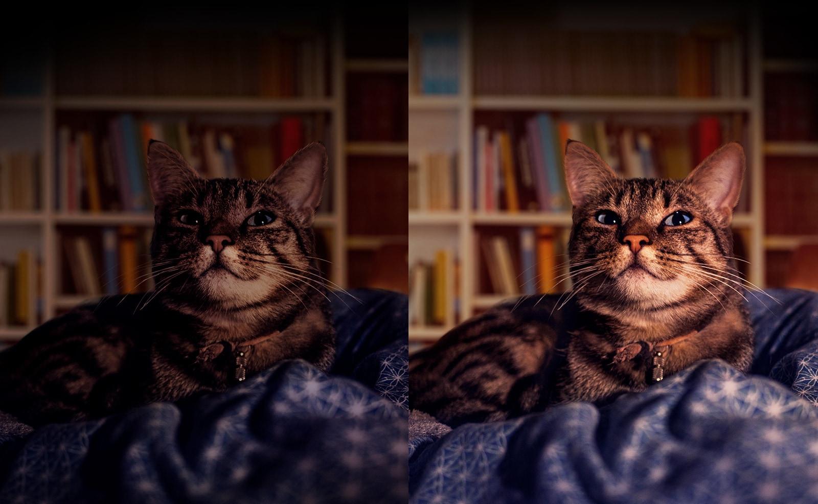 Duas fotos iguais de um gato, uma escura, à esquerda, e outra clara, à direita