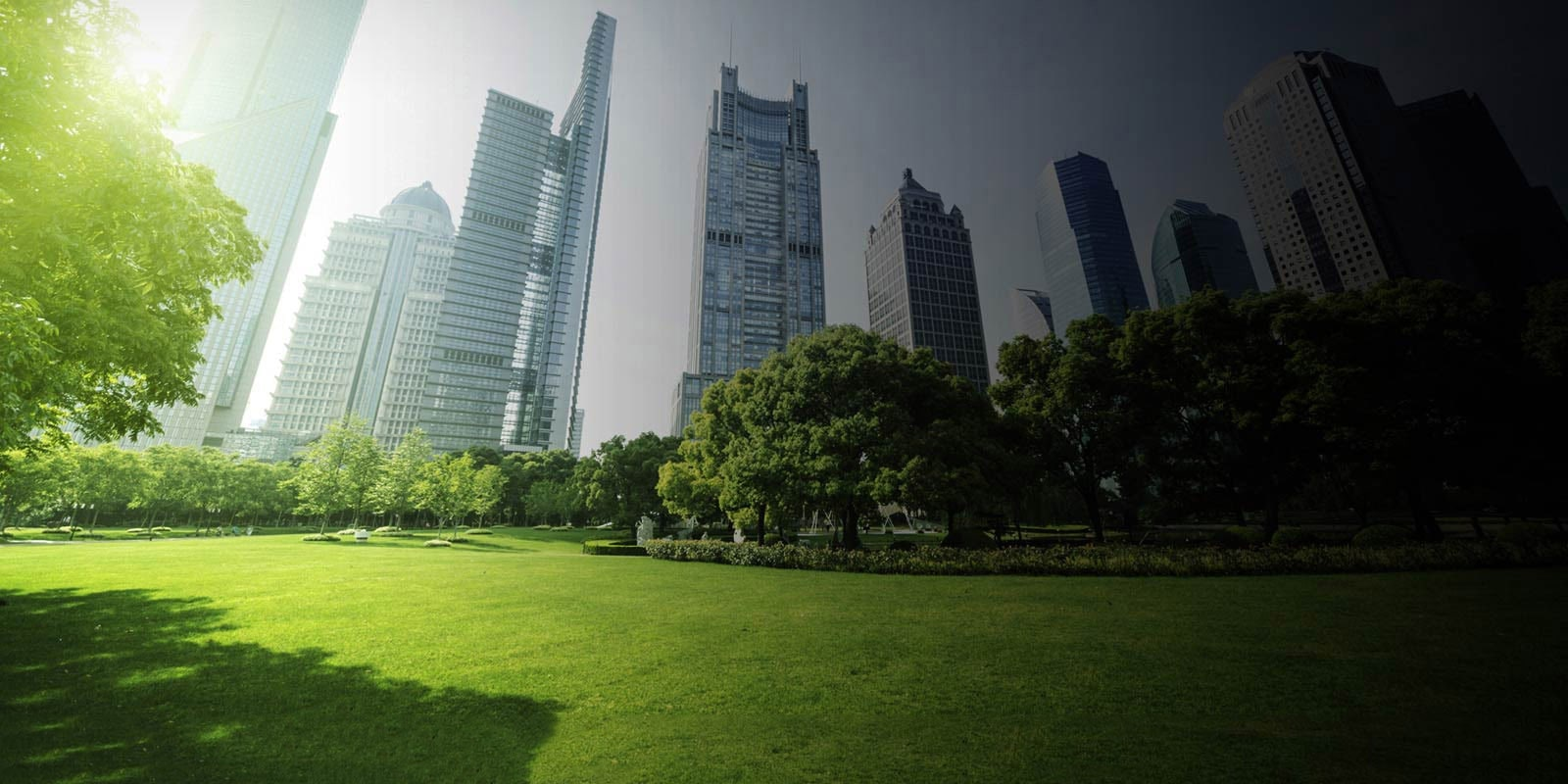 Park Land Surrounded by Skyscrapers