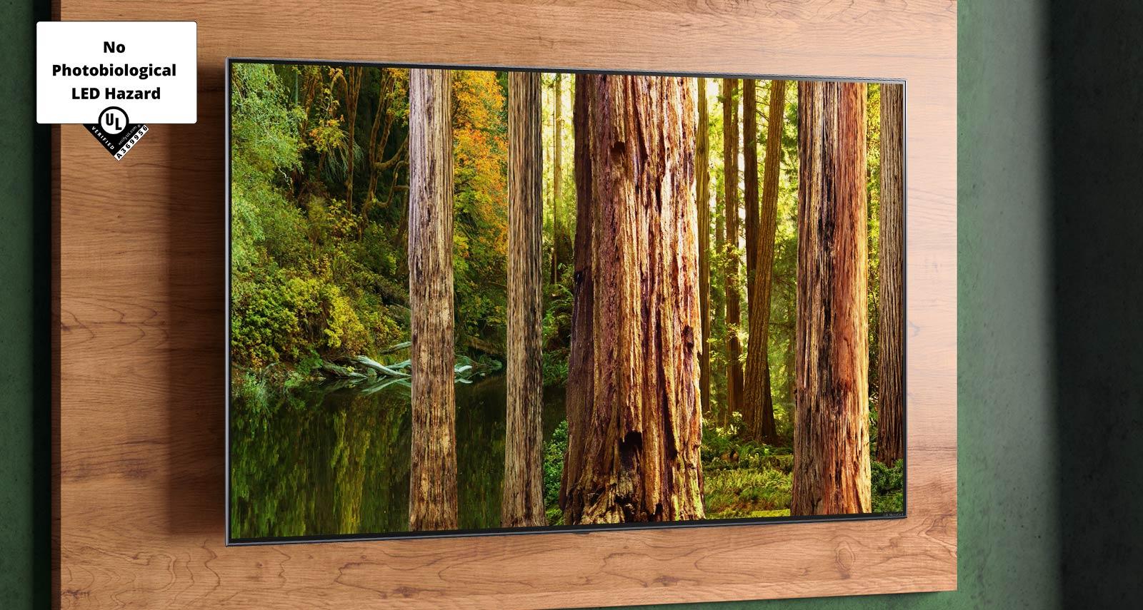 Image de la forêt sur l'écran du téléviseur