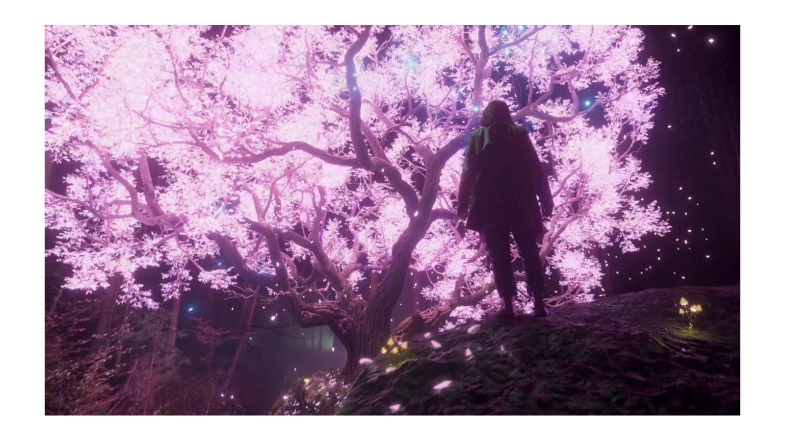 Una pantalla de televisor que muestra los rayos de colores que irradian de un árbol resplandeciente (reproducir el vídeo)