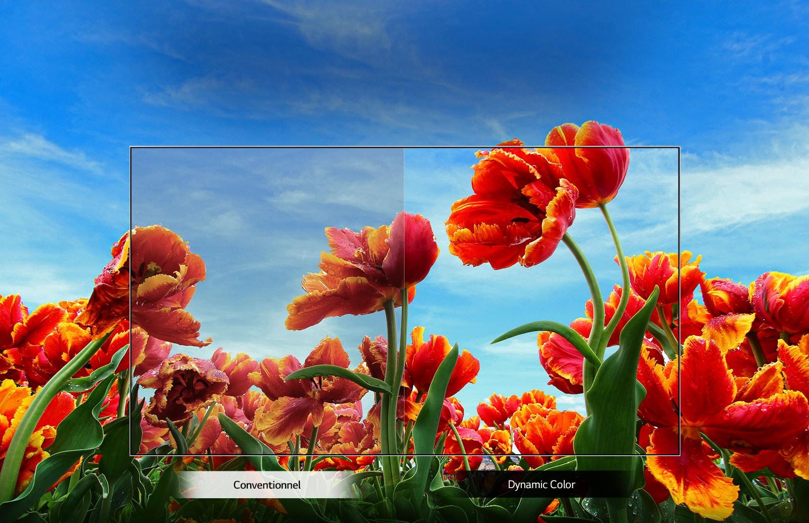 Comparaison de couleurs entre un téléviseur conventionnel et utilisant le processeur