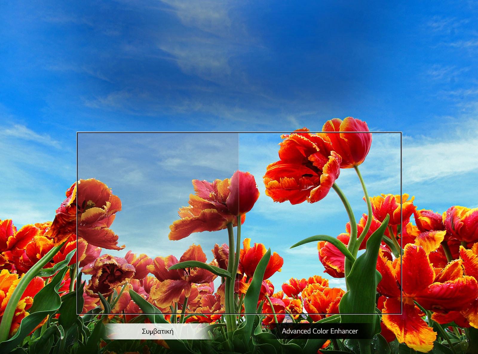 TV-HD-32-LM63-01-Dynamic-Color-Desktop_22042019_v1