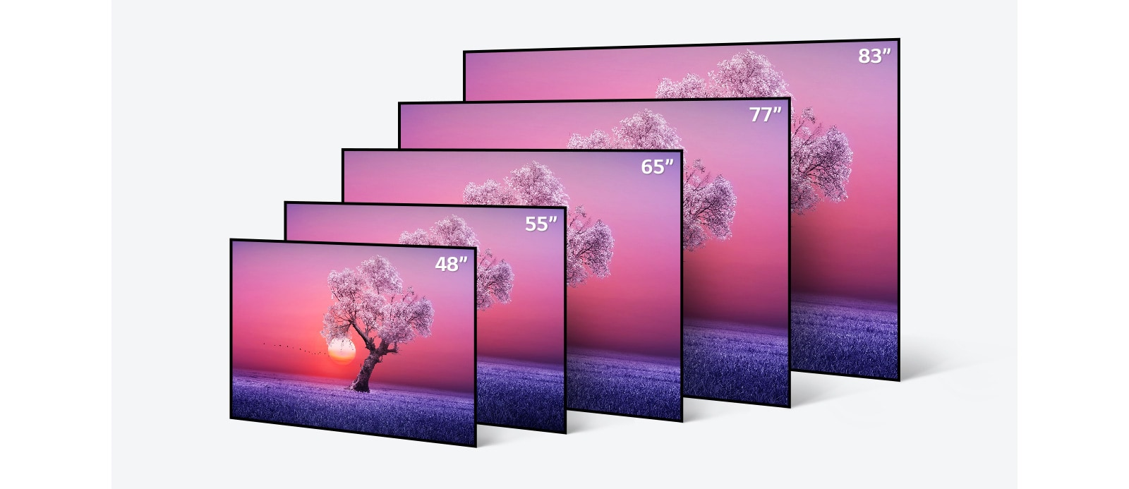 LG OLED 電視機身尺寸繁多(由 48 寸到 83 寸)