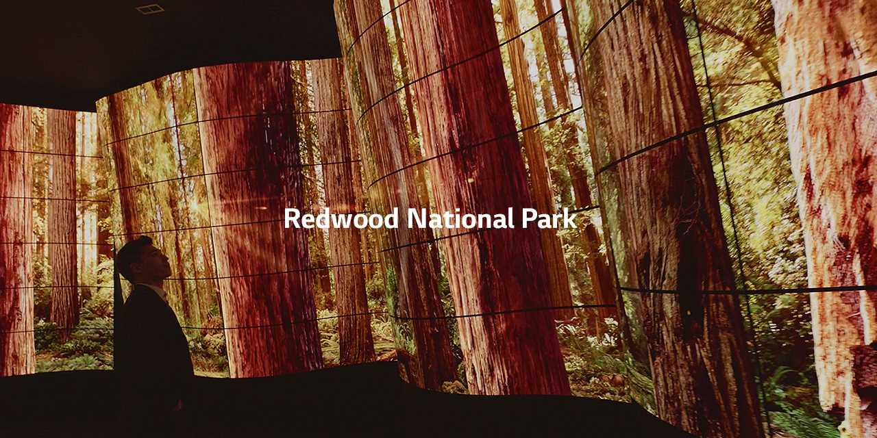 LG presented new lg oled canyon to bring the most stunning oled experience at lg ces 2018 showing redwood national park.