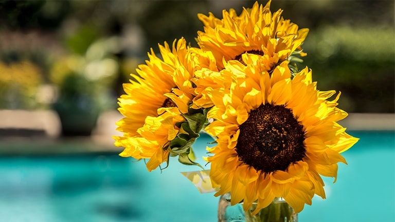 This card describes the dynamic color. It is an image of a sunflower.