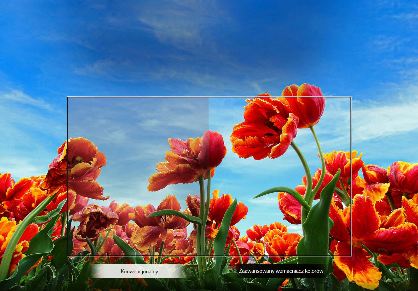 TV-FHD-43-LM63-02-Dynamic-Color-Desktop_V1