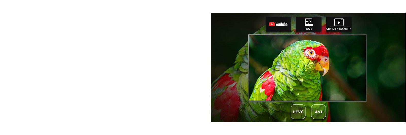 Ekran telewizora przedstawiający kadr z filmu o zielonych papugach oraz ikony YouTube, USB i strumieniowania