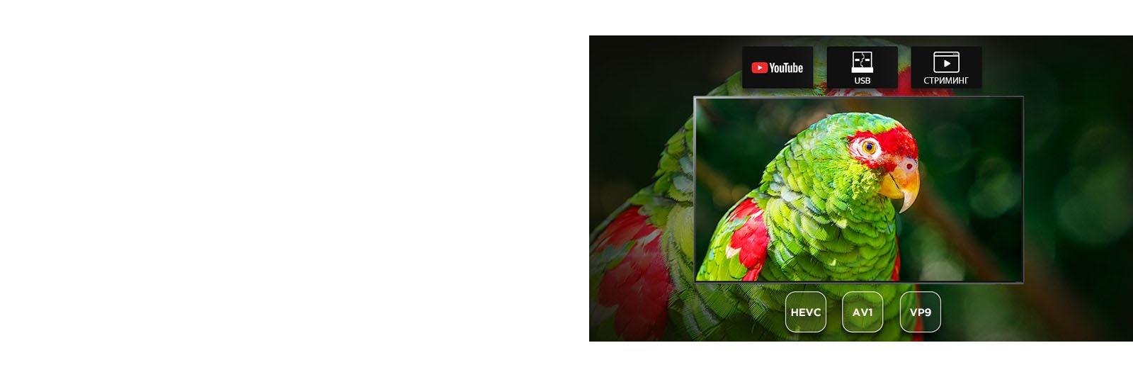 Экран телевизора с изображем попугая и иконкам Youtube, USB и Streaming