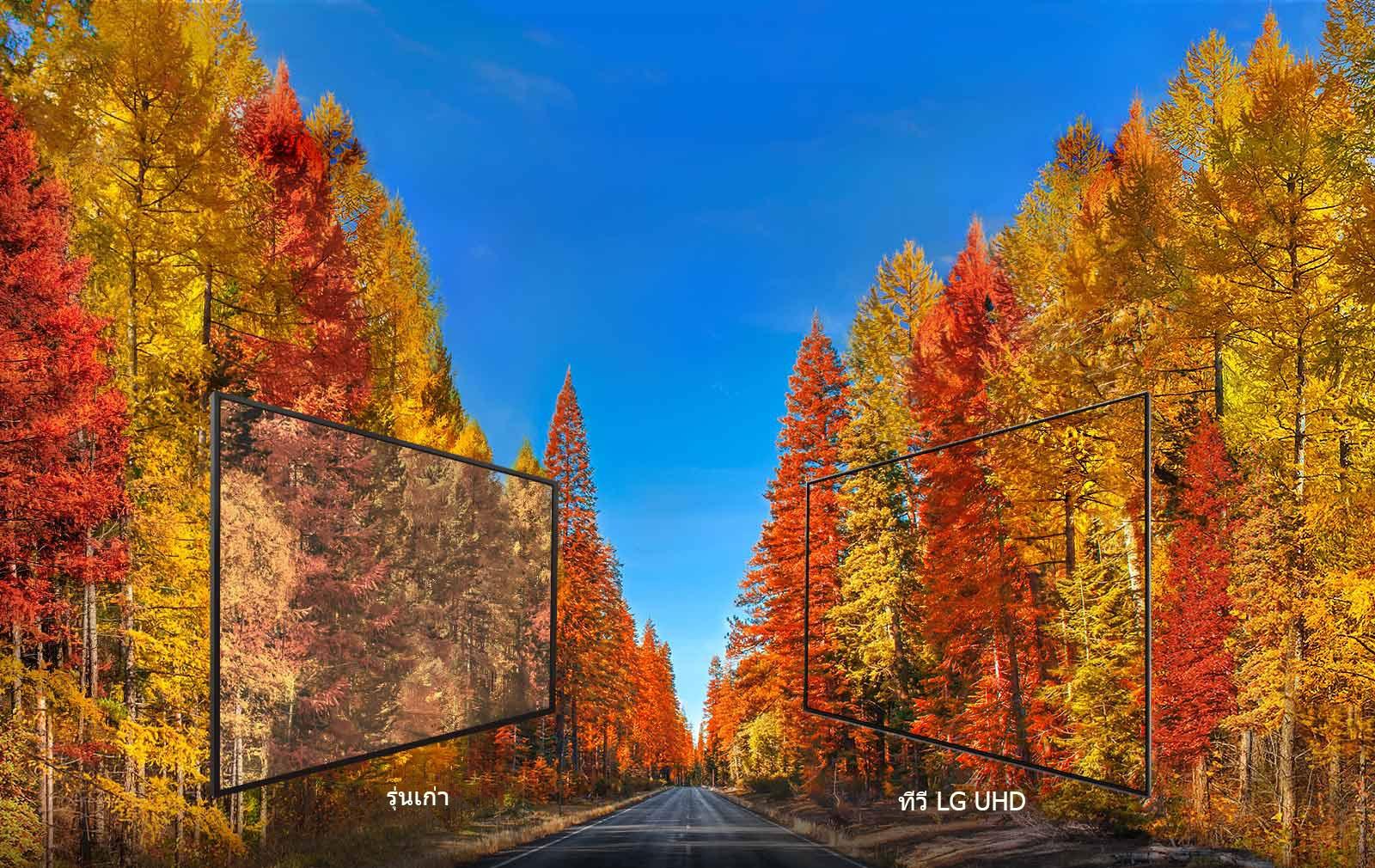 LG UHD TV รักษาความแม่นยำของสี