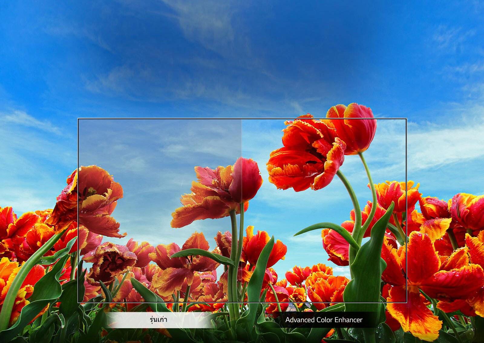 TV-FHD-43-LM57-02-Dynamic-Color-Desktop