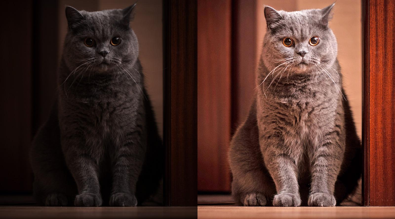 在灰暗出的貓咪照片經過高階影像感測相機技術處理過後所呈現的對比