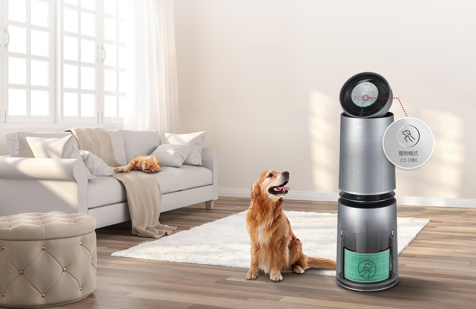 一隻貓躺在窗前的沙發上,狗坐在地毯上,抬頭仰望著空氣清淨機。前景中的圖片顯示一隻手,可以輕鬆更換機器的預濾網。
