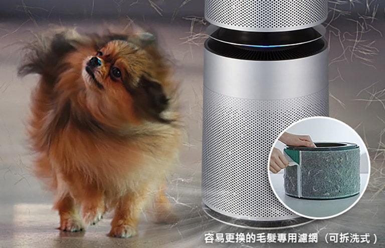 圖片顯示一隻毛茸茸正在抖動身體的狗,而狗毛掉到了空氣清淨機旁。第二張圖片顯示機器旁散發體味的狗。