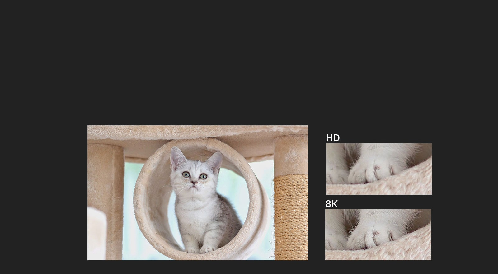 Image of cat with HD and 8K zoom